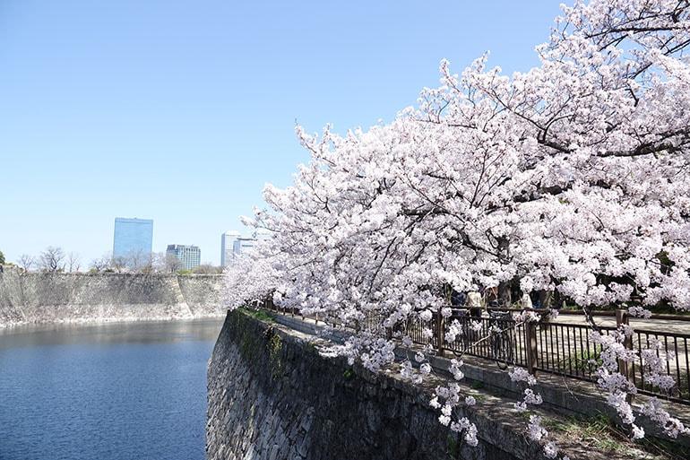 桜をキレイに撮る5つのポイント_11