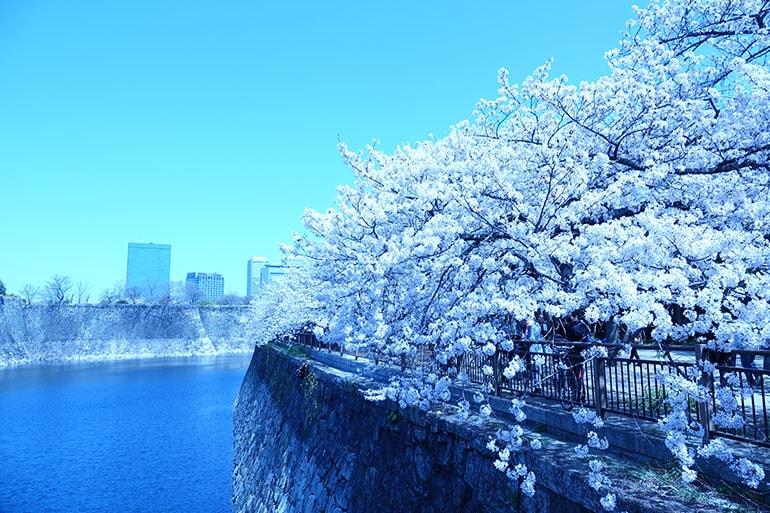 桜をキレイに撮る5つのポイント_12