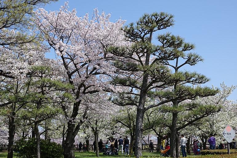 桜をキレイに撮る5つのポイント_15