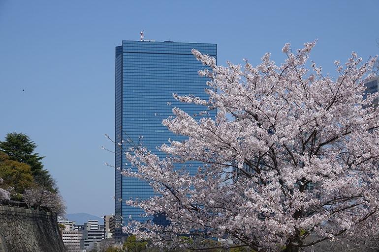桜をキレイに撮る5つのポイント_16