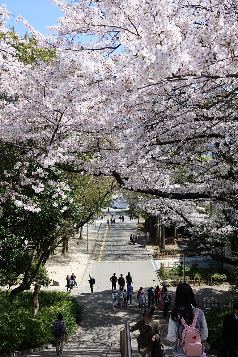桜をキレイに撮る5つのポイント_17