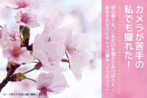 桜をキレイに撮る5つのポイント_2