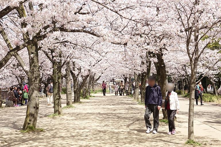 桜をキレイに撮る5つのポイント_6