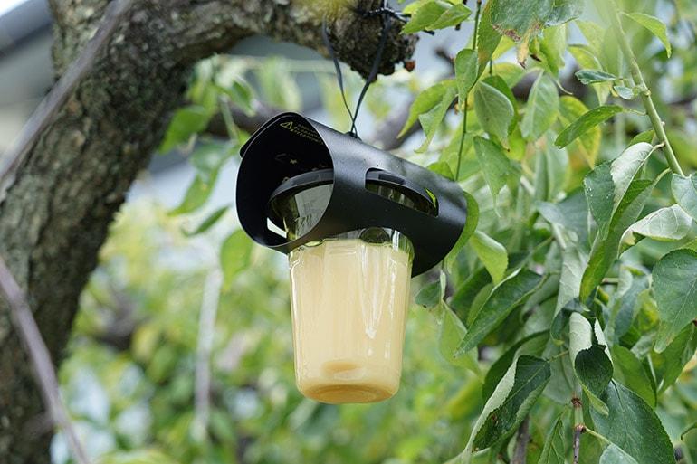 ハチ激取れを庭の木へ設置したところ